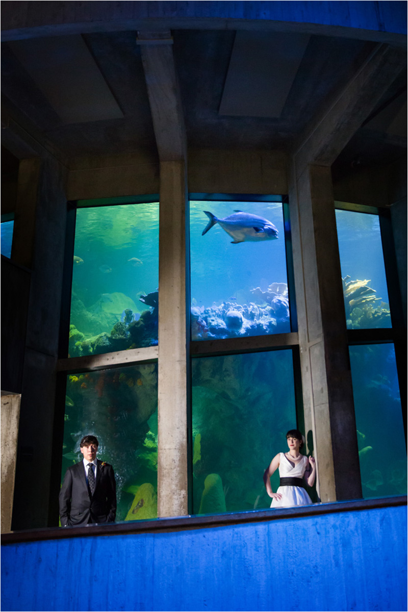 New England Aquarium Wedding